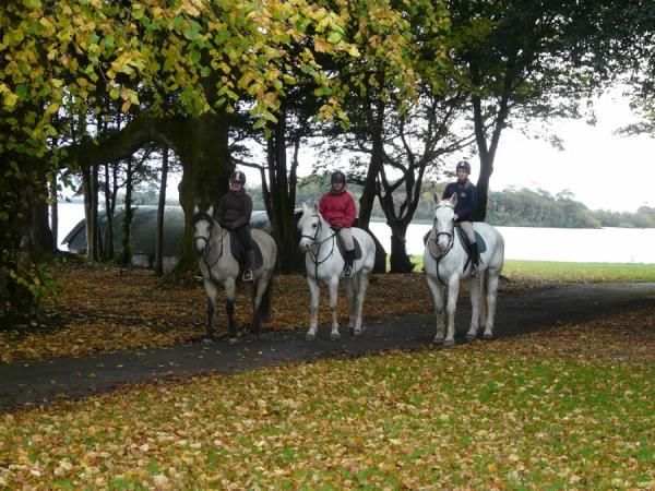 Autumn Trail 2