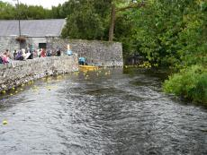 Duck Race at festival