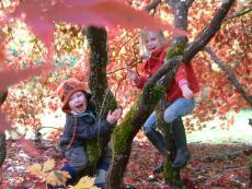 Autumn walk 062